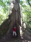 Die gewaltigen Wurzeln des Lebensbaumes